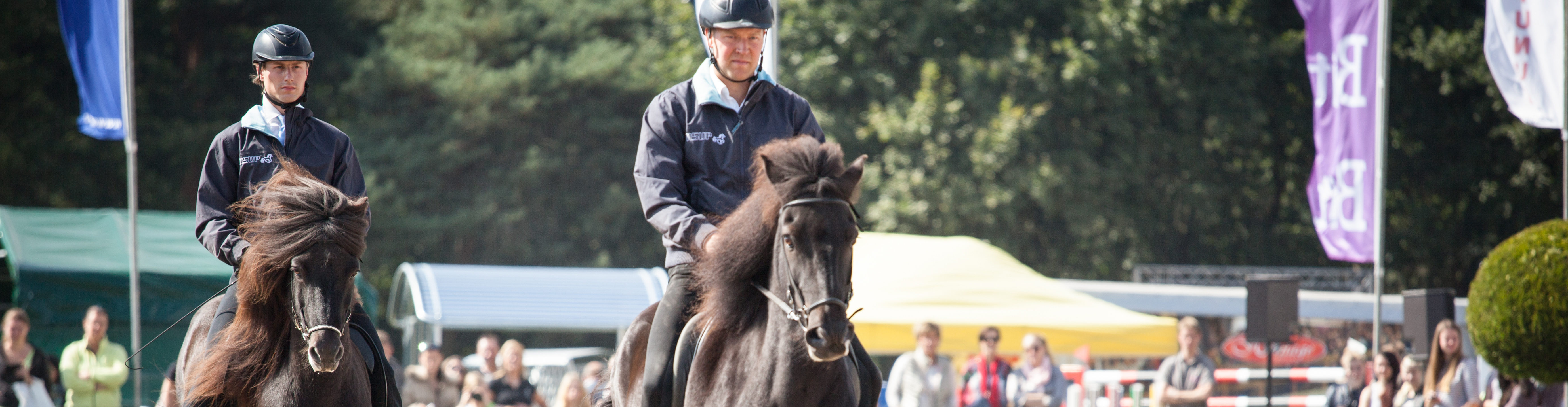 IJslandse Paard-HEADER