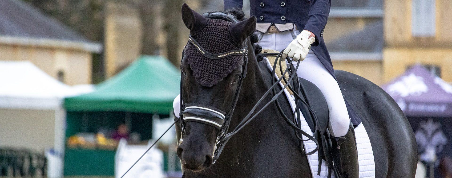 horse-4114146_1920