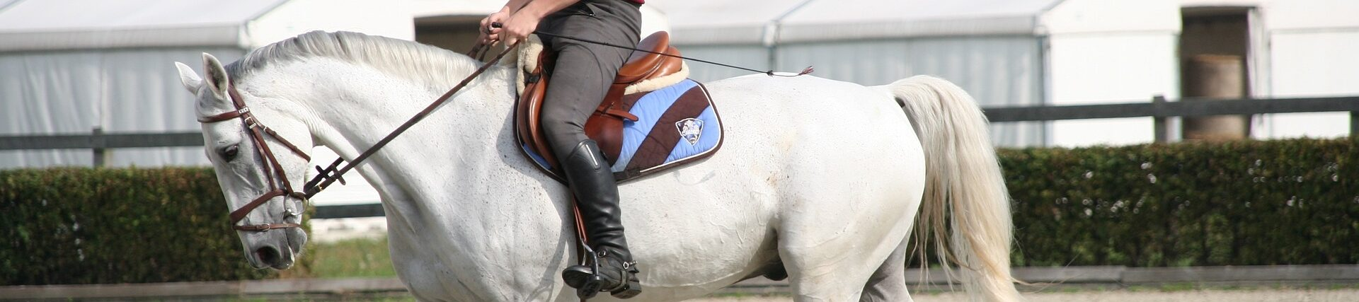 zadel paardrijden saddle