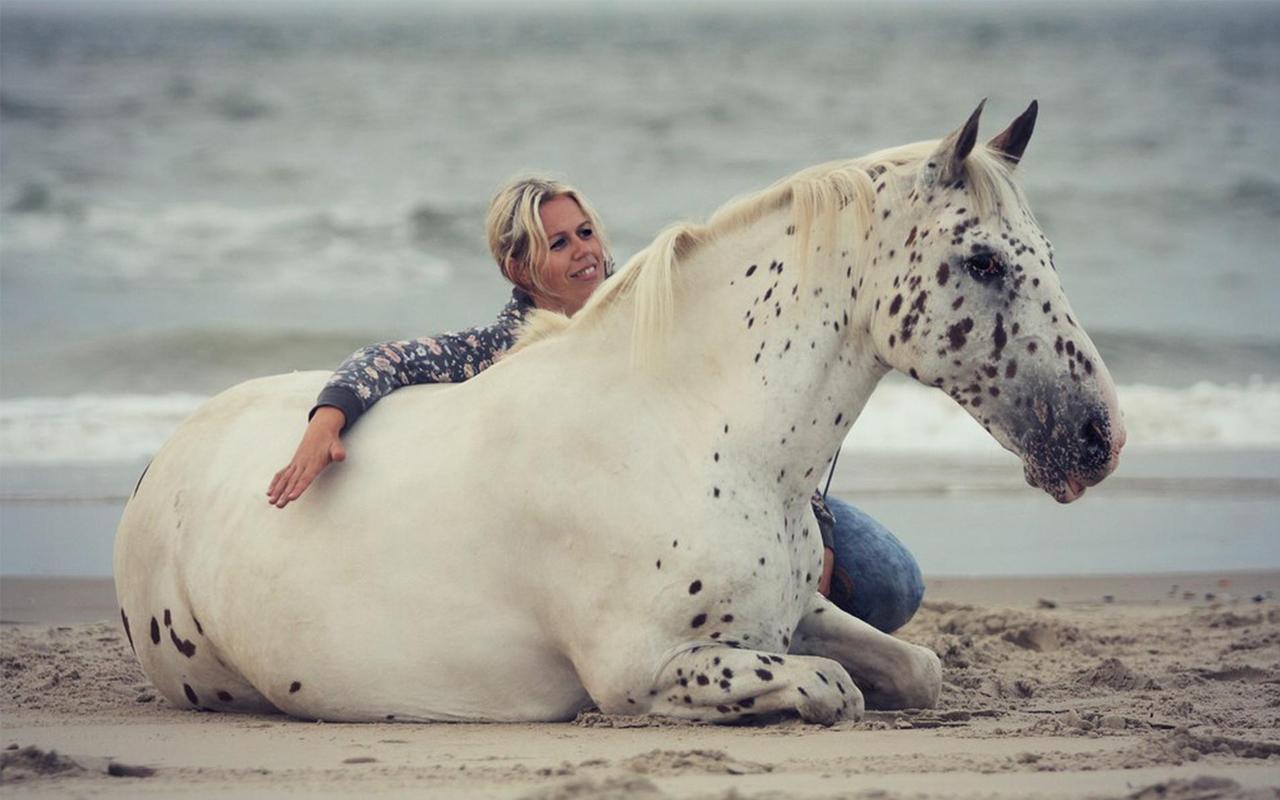 Joyce de Vos horse Event paarden dingen