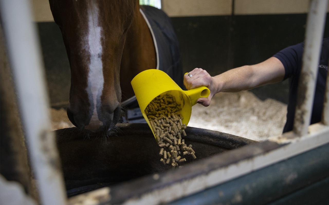 Supplementen voor paarden